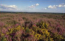 Dorset Heathlands Pure Town Planning town planning consultants Bournemouth and Winchester